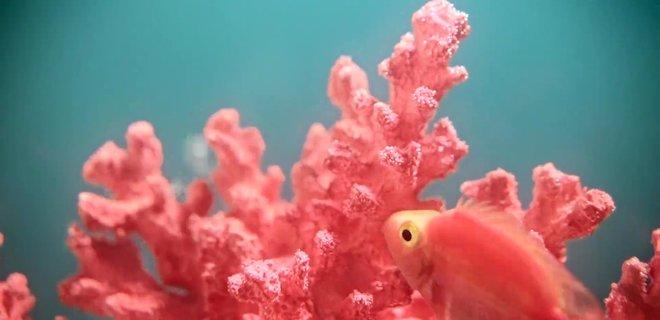 живой коралл цвет